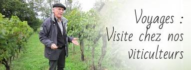 Visite chez nos viticulteurs